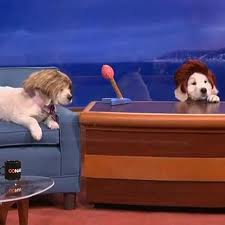 Puppy Conan is so cute in that wig!