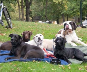 Dogs Love Central Park!