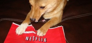 This dog loves Netflix too...!